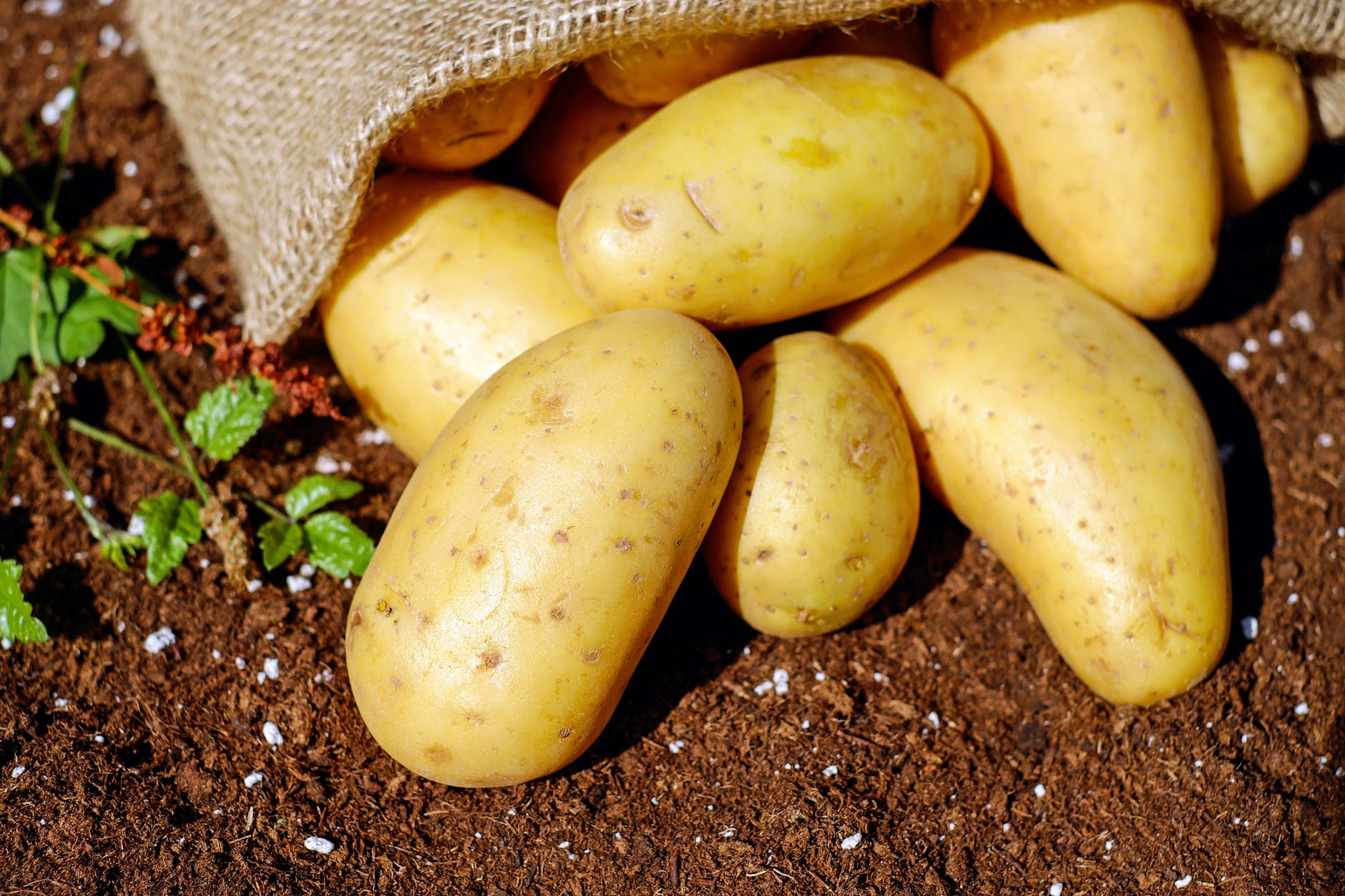 potatoes - most popular foods in the world