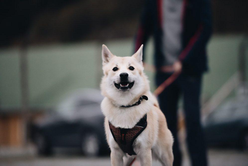 bilde av glad klikkertrent hund