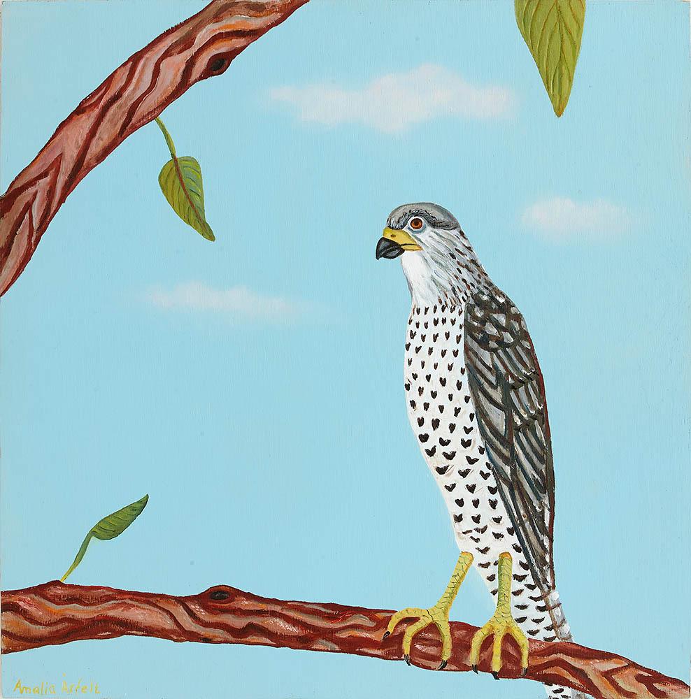 Rovfågel på gren
