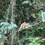Squirrel monkey during a tour in the Cuyabeno Amazon Reserve in Ecuador