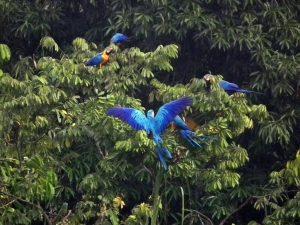 Tambopata Research Center Amazon Lodge Peru