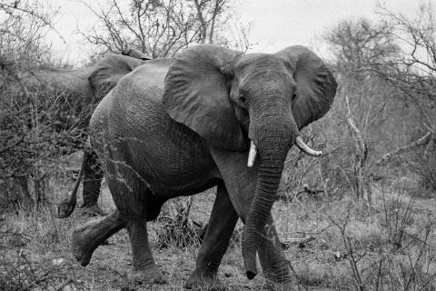 Hvordan tandlægen spiste en hel elefant uden at få noget galt i halsen - blogindlæg af Anita Cordes