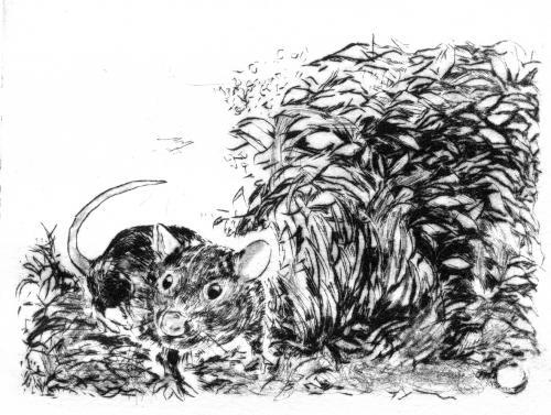 Rat à la plaine de jeux