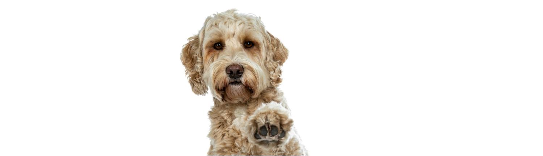 Annemarie Albersen hond en gedrag hondengedragstherapeut regio Tilburg