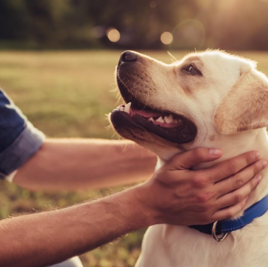 Training Annemarie Albersen | Voor hond en gedrag