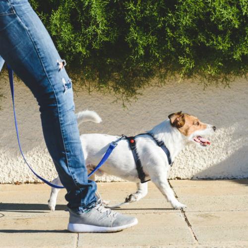 Hondengedragstherapie Annemarie Albersen gedragstherapie Oisterwijk