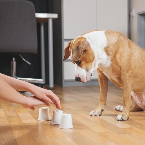 Activiteitencoach voor honden Annemarie Albersen