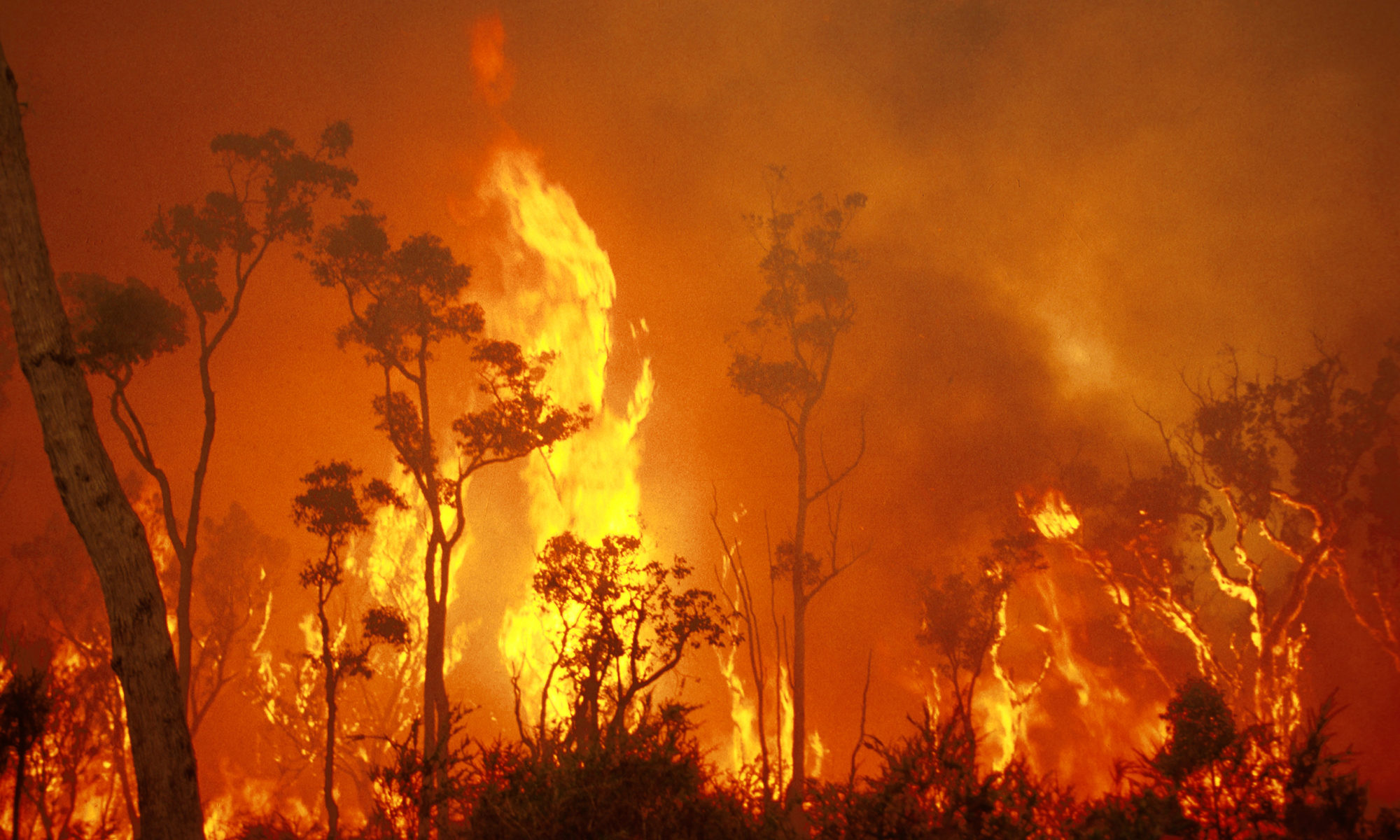 Photo of bush fire destruction in Australia
