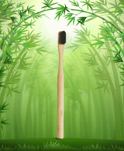 A green bamboo forest