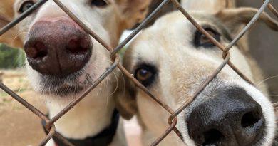 В The Dog House - преспиш над набирането на средства