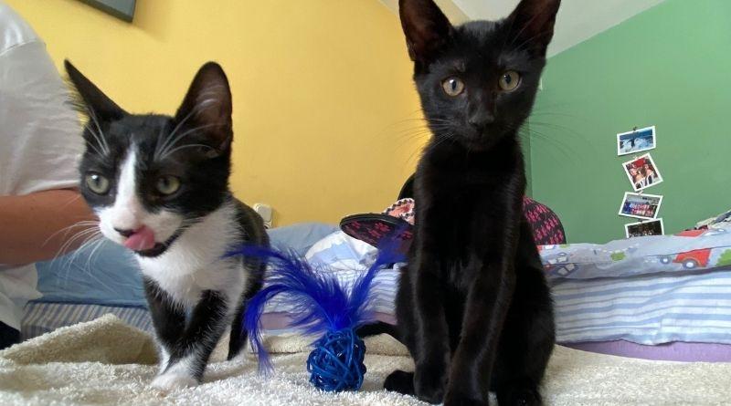 Oreo & Simon