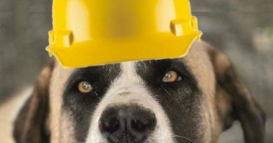 SOS! Dog Kennel Refurbishment