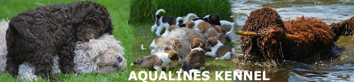 Aqualines Kennel