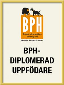 bph-diplomerad-uppfodare-225x300