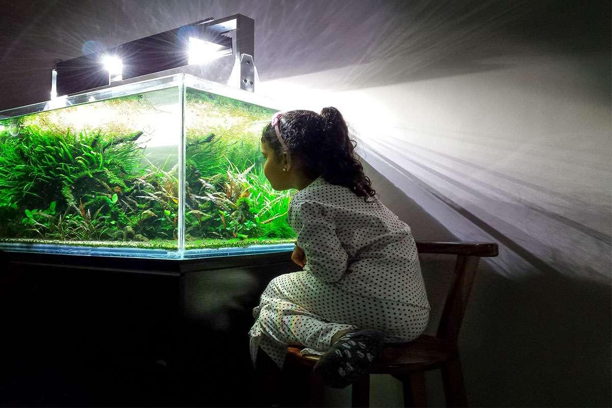 bemesting aquariumplanten