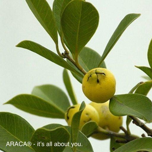 ARACA® - det handler om dig.™