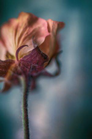 Flower Mystical-1