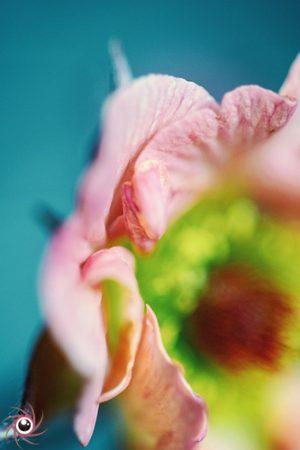 flower mystical 4