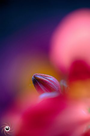 Flower Mystical 5