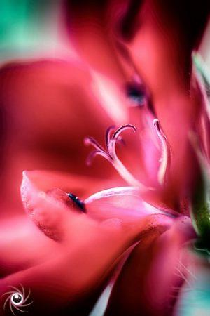 Flower Mystical 6