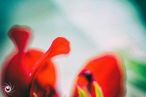 Flower Mystical 8