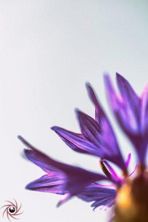 Flower Mystical 9