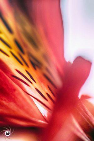 Flower Mystical 11