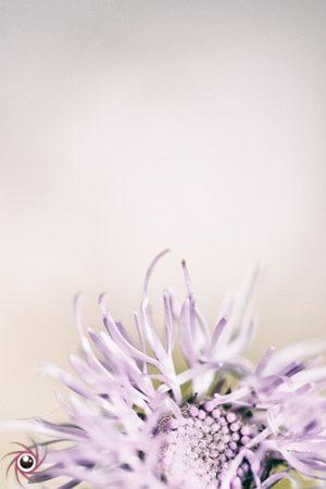 Flower Mystical 12