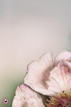 Flower Mystical 16