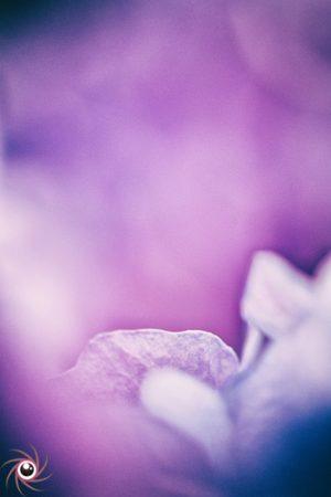Flower Mystical 18