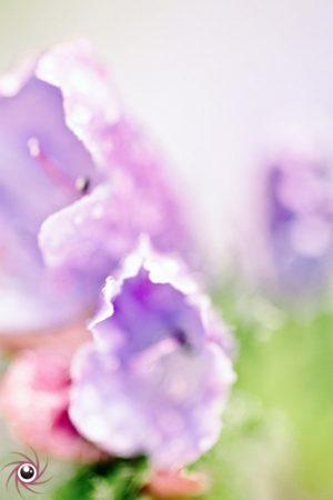Flower Mystical 19