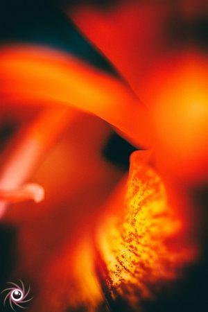 Flower Mystical 20