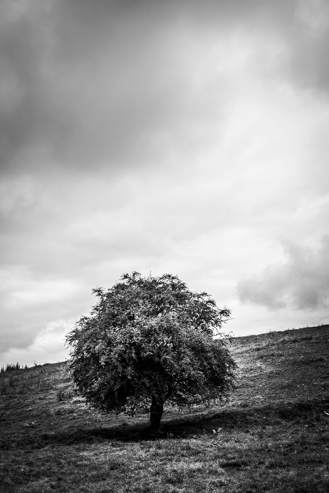 belgique-arbre