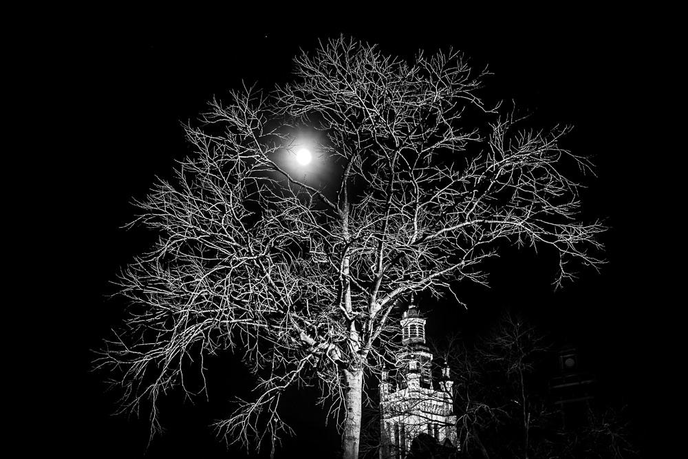kerk en boom