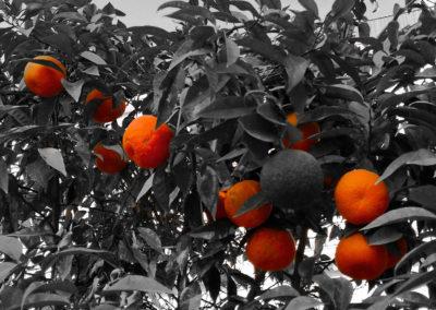 2 Citrus in black white background.