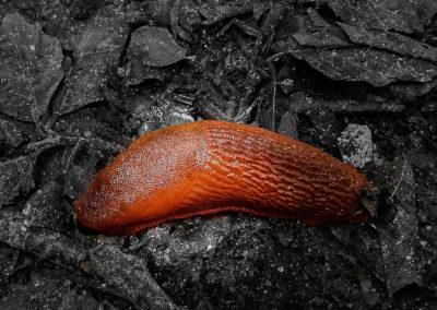 Brown forest snail in gray terrain