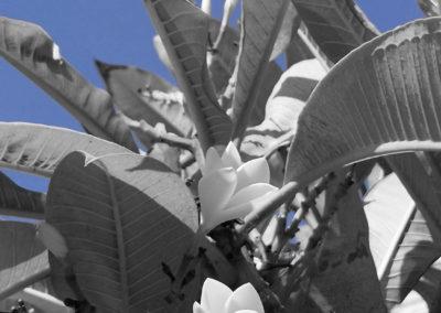 White flower in blue background(Fruit).