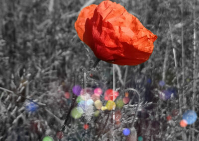 2 Red poppies on a gray background and color dots.