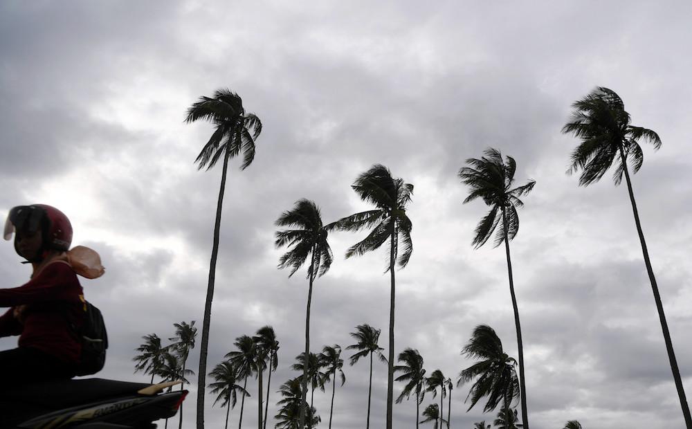Strong winds bend coconut trees in Kampung Pantai Sepat in Kuantan November 25, 2019. — Bernama pic