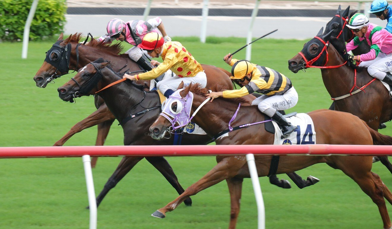 Gold Chest (middle) beats home his rivals to win at Sha Tin on Sunday.