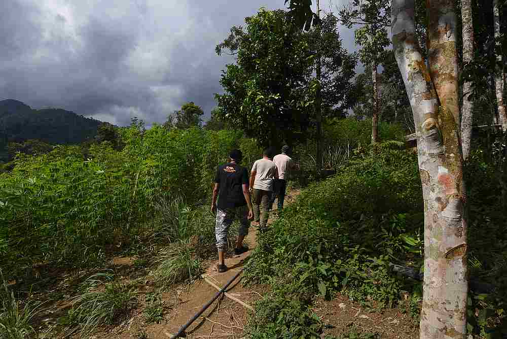 The Temiar natives of Kampung Pos Toel made their living by selling crops and forest products. — Picture by Arif Zikri