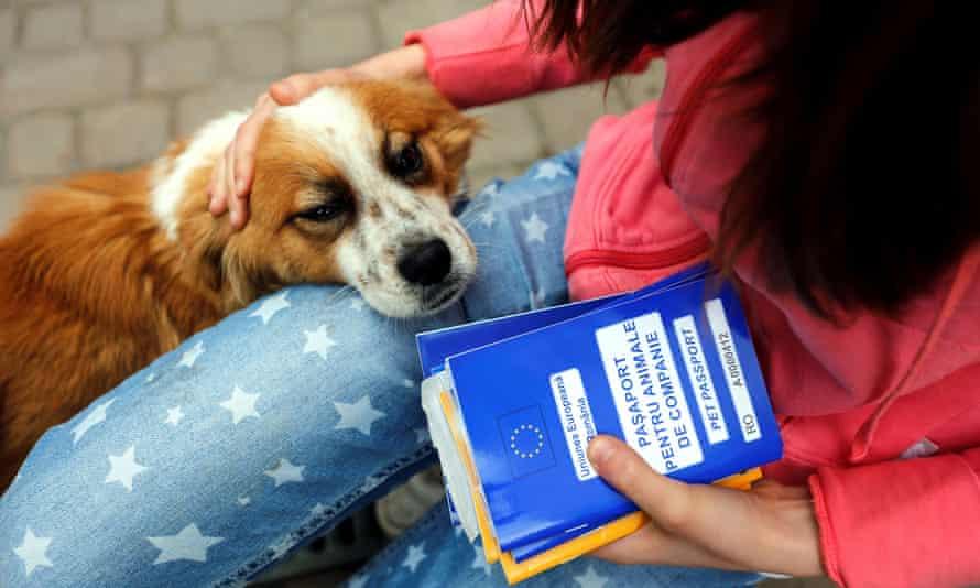 Ana-Maria Ciulcu, a Romanian, holds EU pet passports