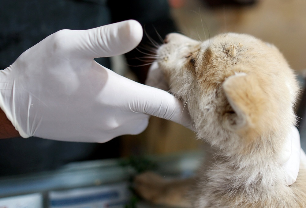 Veterinarian Murad Jamal checks a dog at his veterinary clinic in Sanaa in this file picture taken on January 20, 2019. — Reuters pic