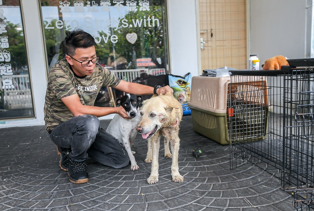 Mutts and Mittens cafe cum adoption centre will scale down operations. ― Picture by Farhan Najib