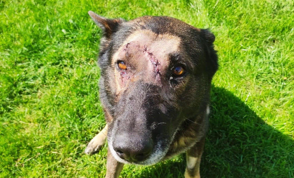 Kaiser received multiple stitches on his head after a knife attack on Sunday. — Picture via Metropolitan Police website