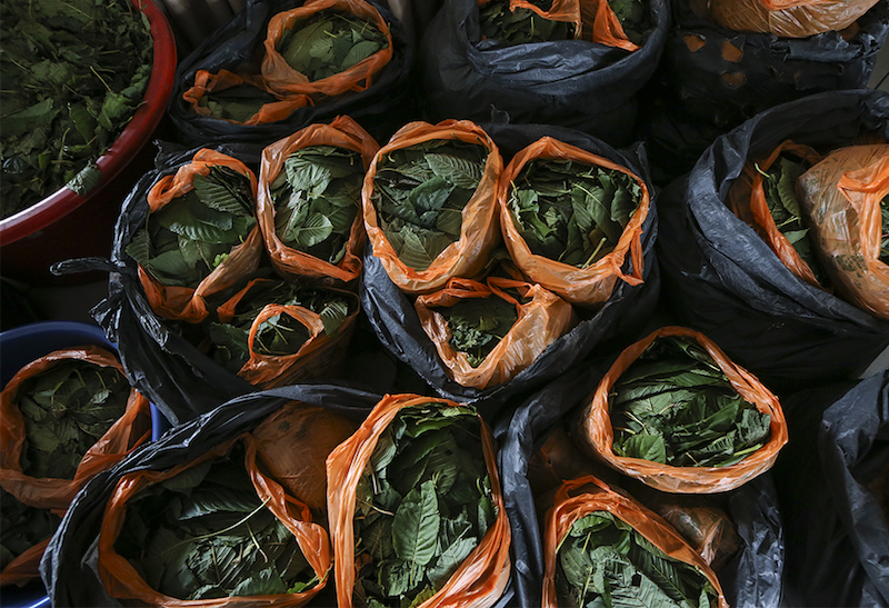 Police seized 315 plastic bags of ketum leaves weighing over 3,000kg and detained four men in two separate arrests at a roadblock (SJR) in Kupang, near Baling, today. — Picture by Azneal Ishak