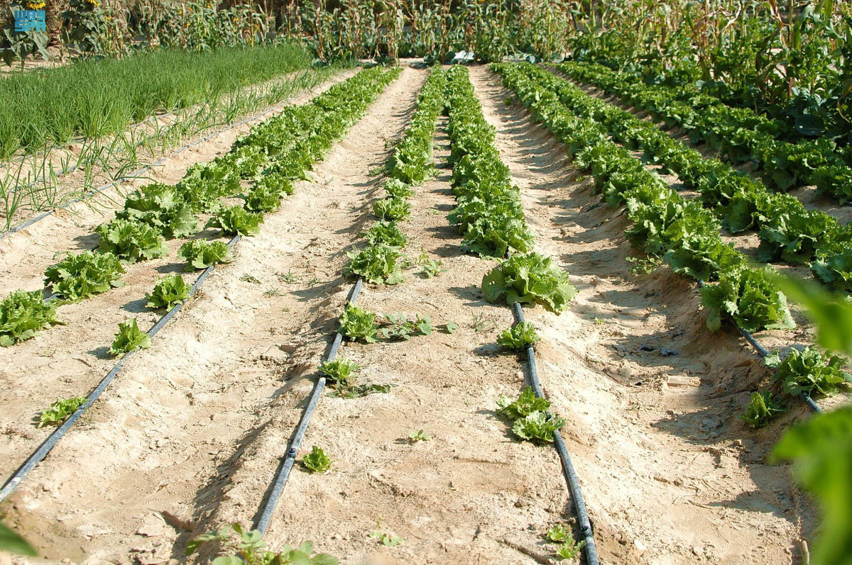 Beneficiaries of the agricultural subsidies program to benefit greatly from theelectronic linkage service. (SPA)