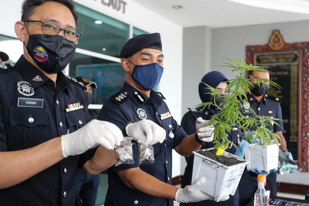 ACP Soffian Santong (middle) holds a cannabis plant seized during a recent raid at the Northeast district police station in George Town September 15, 2021. — Picture by Sayuti Zainudin