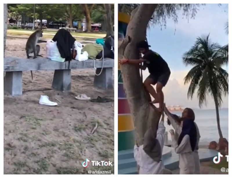 Anis and her friends attempted to climb the tree to get the bank notes stuck in branches. — Screengrab via TikTok/ansazmii