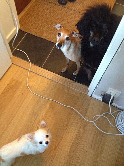 Chihuahuan Ester i Stockholm.